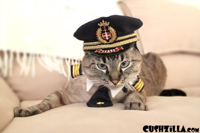 cat-plane-intl